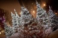 Arboriculture Décembre