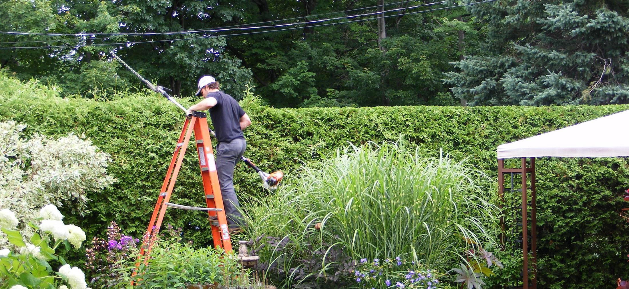 arboretum experts taille de haie de c dres. Black Bedroom Furniture Sets. Home Design Ideas